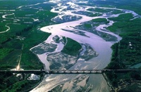 В китайской реке нашли тысячу мертвых уток