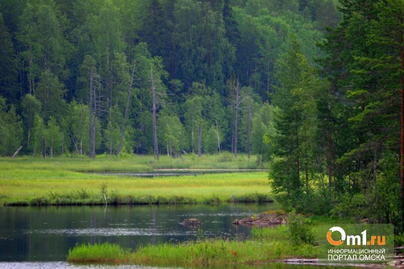 Омские власти радуются, что в регионе не горят леса