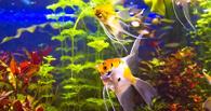 Власти планируют потратить 44 тысячи бюджетных рублей на содержание аквариума