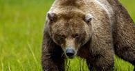 Медведь чуть не убил мужчину в Омской области
