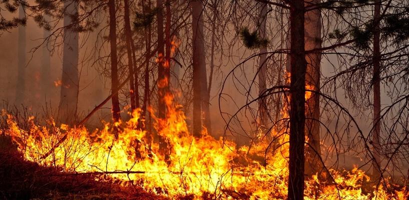 В Омской области лесные пожары чаще происходят в четные годы