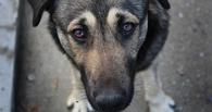 Омич стал свидетелем отстрела бездомных собак из пневматического ружья