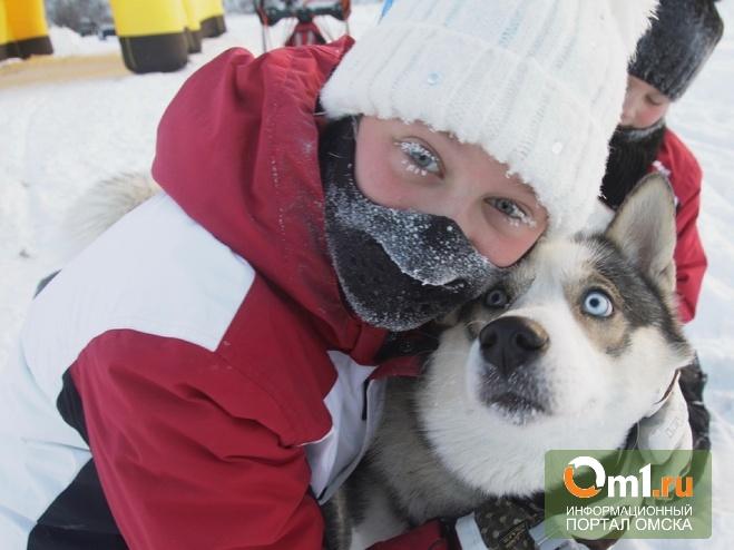 В Омске пройдут гонки на собачьих упряжках