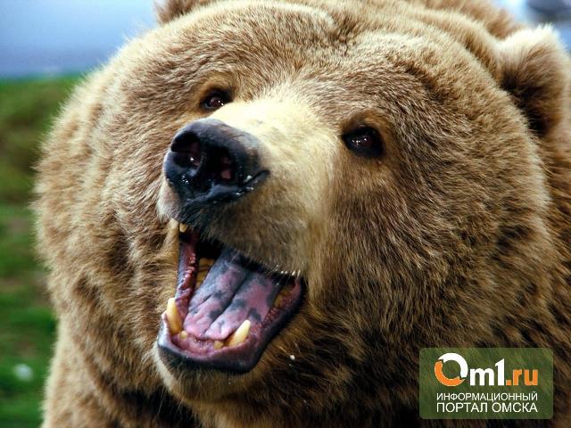 В деревне под Омском школьники встретили медведя