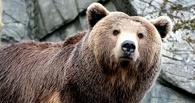 Омское минприроды опубликовало фото медведя перед спячкой