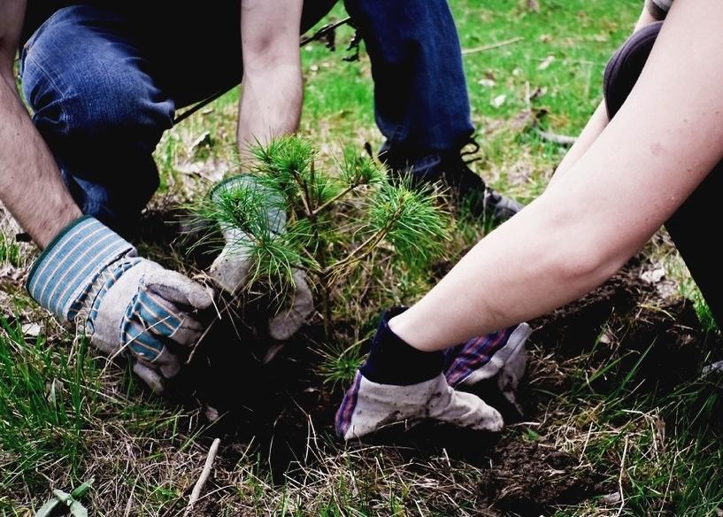 В омском сквере на улице Мельничной посадят 500 новых деревьев