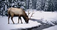 В Омской области на свалке нашли шкуру убитого лося