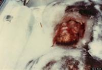 В музее США выставят труп снежного человека