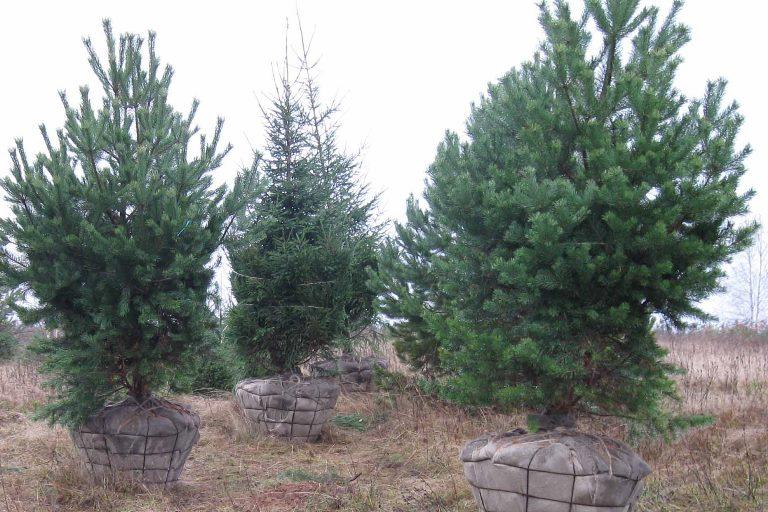 Стихийную высадку деревьев в Омске заменит плановая зеленая архитектура