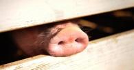 За неделю свиным гриппом и ОРВИ заболели почти 10 тысяч омичей