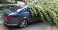 Надежда есть: за чей счет оплатить ремонт автомобиля, если на него упало дерево