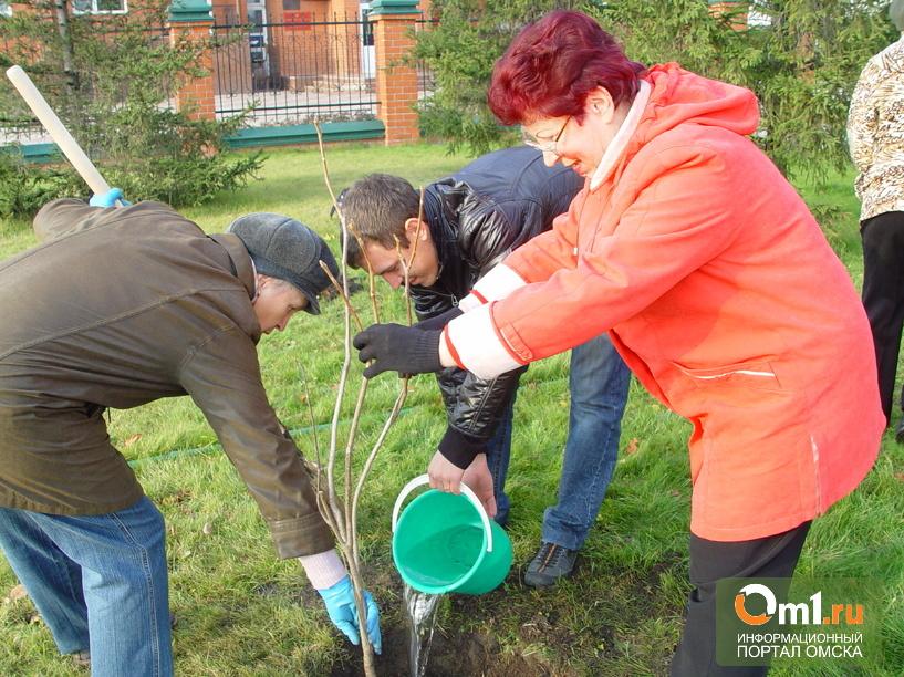 Более 7000 деревьев посадят в Омске в ближайший месяц