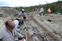 Мексиканские ученые откопали пятиметровый хвост динозавра
