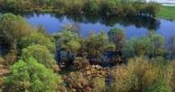 Красная книга Омской области пополнится десятью новыми видами растений