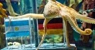 Кандидата в президенты Белоруссии выберет осьминог