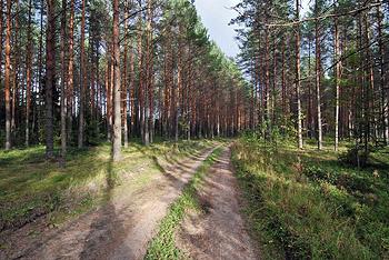 Пенсионерка из Омской области заблудилась в лесу: она провела 5 дней в тайге