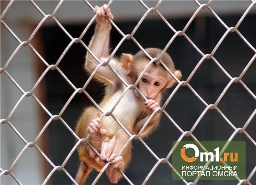 В Большереченский зоопарк привезли редкую макаку