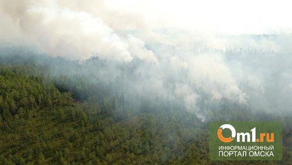 Крупный лесной пожар в Большеуковском районе Омской области ликвидирован