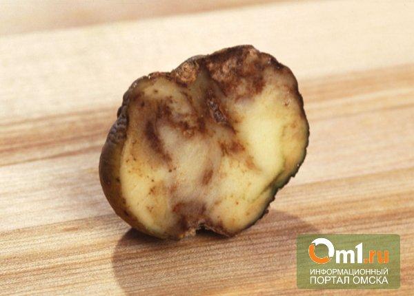 Омичей предостерегают от покупки опасной картошки из Китая