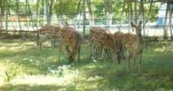 В Омской области «развелось» семейство пятнистых оленей