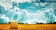 В Омской области четверо мужчин украли почти тонну сена
