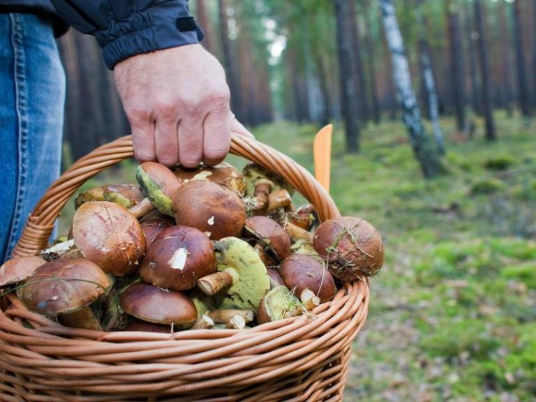 В Омской области полицейские ищут несовершеннолетнего грибника и еще двух потерявшихся в лесу людей