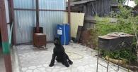Знаменитый пес Лимон из Омской области учится водить моторную лодку