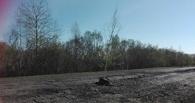 Омичи высаживают деревья в ямы на дорогах