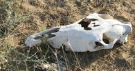 В Омске за скотомогильник у «Кригогенной техники» накажут ипэшника и чоповцев