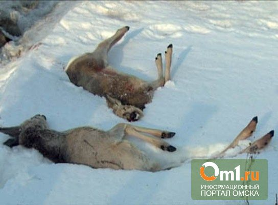 """Омская полиция задержала """"браконьеров"""", убивавших косуль"""