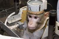 Иранские ученые запустили в космос обезьяну