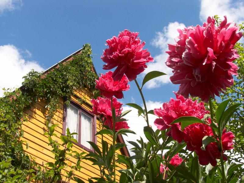 В Омской области застраховано не более 15% загородных домов и дач
