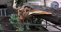 Улицу Фрунзе в Омске блокировало упавшее дерево