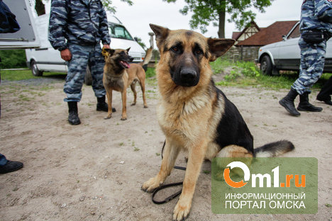 В Омскую область под видом коньяка пытались провезти опий