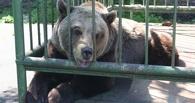 Омич больше года держал медведицу в своем дворе, а теперь ищет ей дом