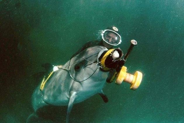 Крымские боевые дельфины готовы выполнять приказы Владимира Путина