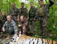 В Приморье застрелили тигра, охраняемого самим Путиным