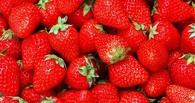 В Омскую область не разрешили ввезти клубнику и манго из Бельгии и Литвы