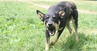 Сторожевая собака напала на семилетнего омича, приехавшего к бабушке в деревню