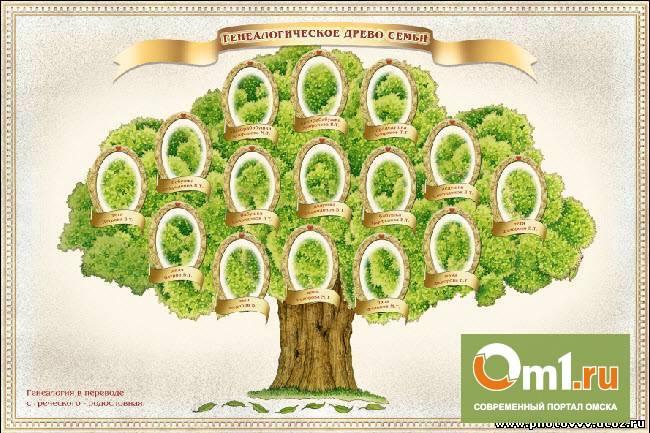 В Омской области ищут самое большое родословное дерево