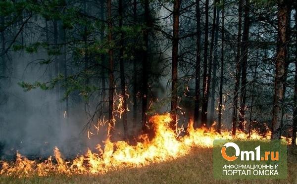 За сутки в Омской области произошло шесть лесных пожаров
