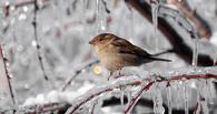 На 8 марта в Омск вернутся 25-градусные морозы