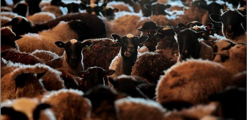 На границе Казахстана и Омской области задержали свыше трех тонн мяса