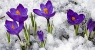 Омские синоптики назвали прошедший март уникальным за последние 100 лет