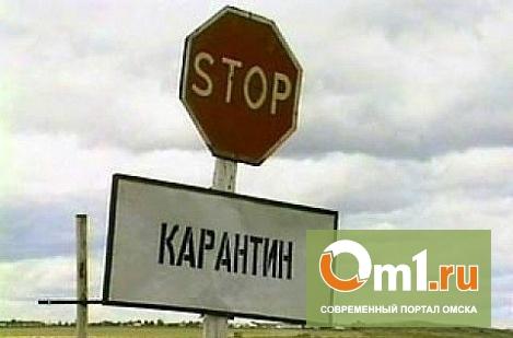 В Омской области закрыли село на карантин из-за бешенства