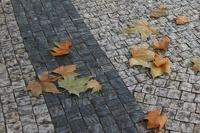 Финские синоптики: через 50 лет в стране не будет зимы