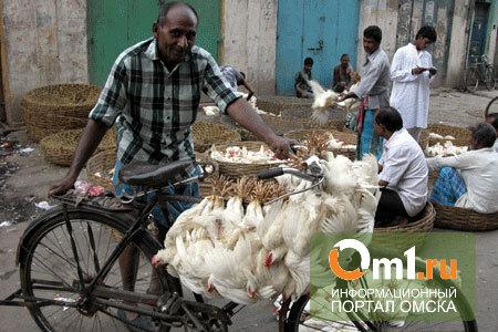 У виновника аварии в Омской области приставы забрали куриц и велосипед