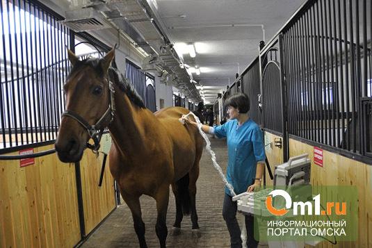 В Омской области среди лошадей началась инфекционная анемия