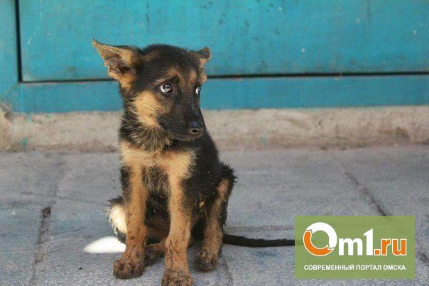 В Омске водитель специально переехал щенка