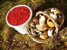 Сборщики грибов и ягод в Омской области станут легальными бизнесменами